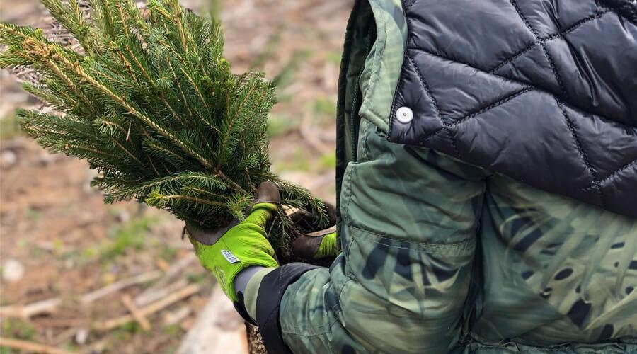 Príprava výsadby stromčekov v Mošovciach